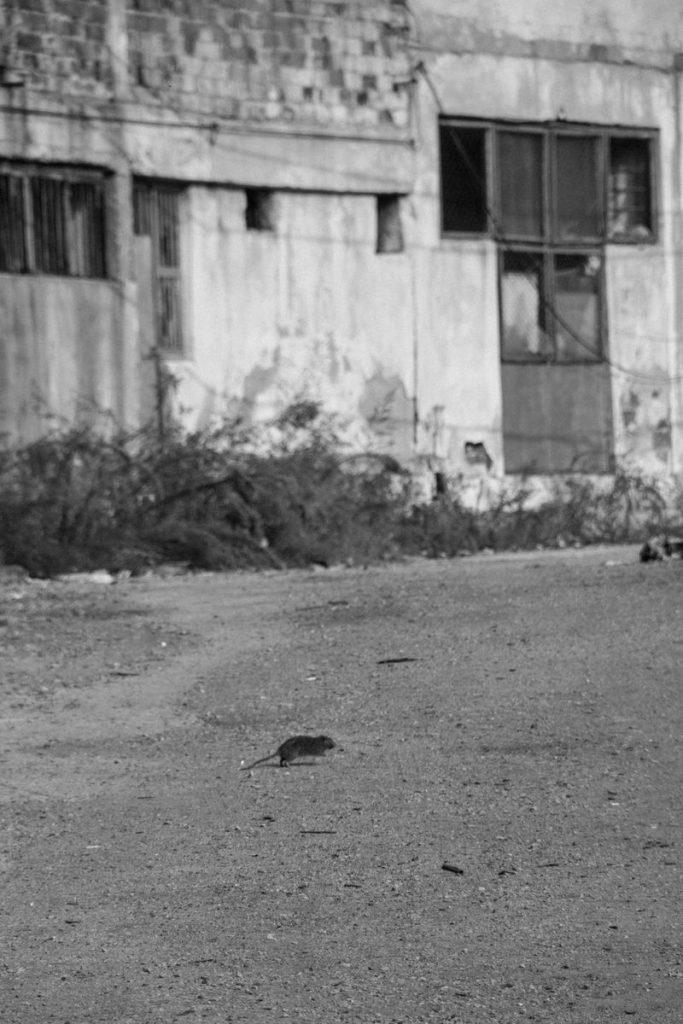 O Almila Kus Street Photography 6 Web 683x1024