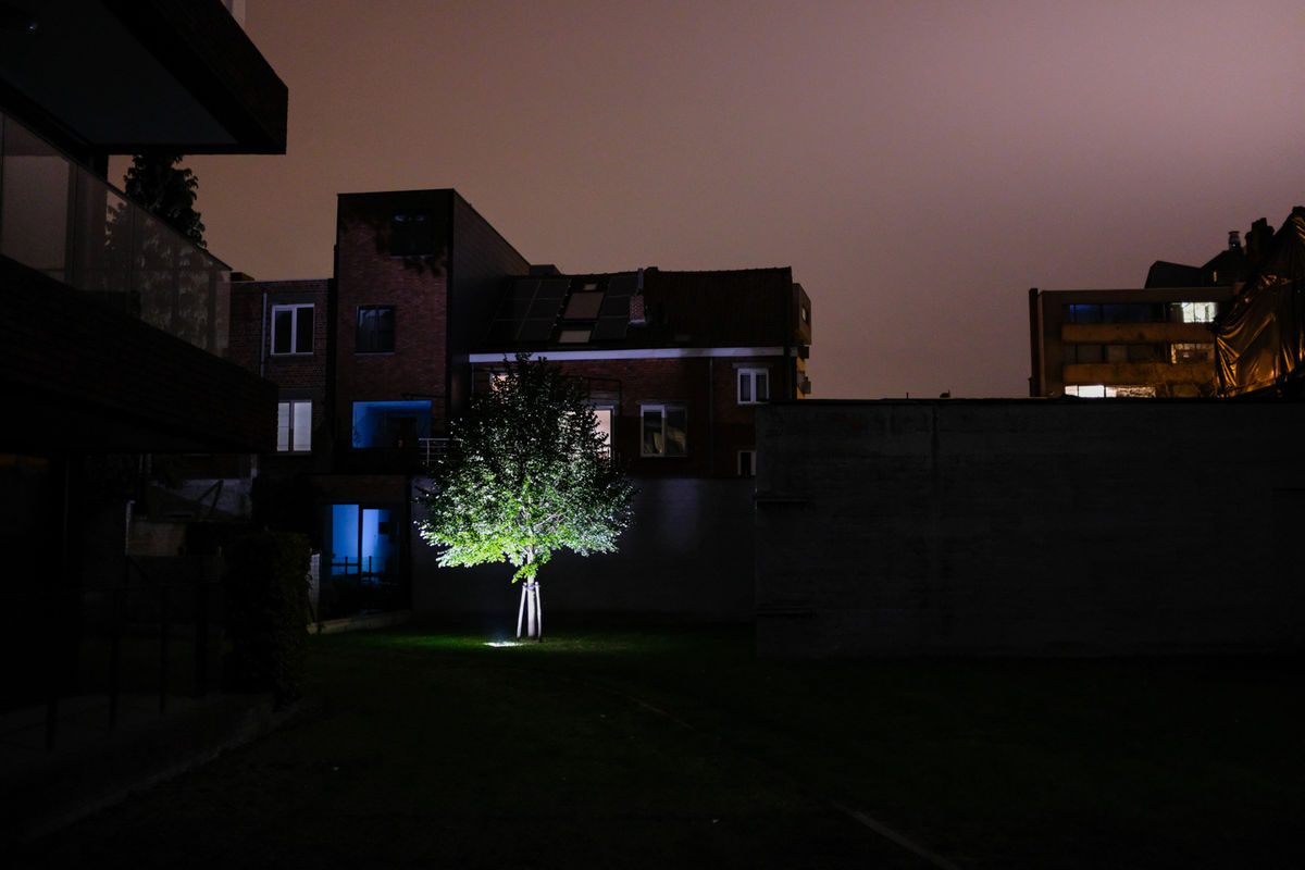 All is a dream - tree between the houses at night.